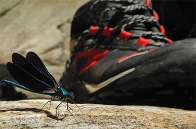 Adidas schoen en een libelle op rots
